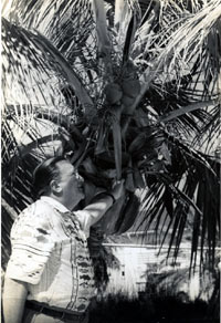 Walter O'Malley observes one of many beautiful palm trees on the Dodgertown property.